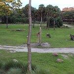 Фотография Disney's Animal Kingdom Villas - Kidani Village