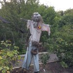 The rabbit protected area has an amazing scarecrow too!