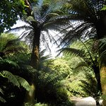 The amazon palms were just amazing.