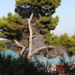 Photo of IBEROSTAR Alcudia Park