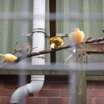 Canary - the bird used in the mines - go and have a look why