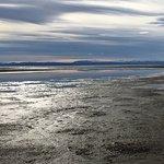 Photo of Laguna Nimez Reserve