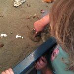Foto de Tybee Island Marine Science Center