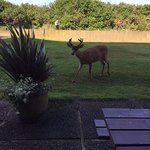 Enjoying our complimentary continental breakfast with a surprise visitor