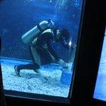 A real SCUBA diver cleaning a big tank