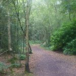 The beautiful woodland walk