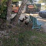 Pipo's Original Cuban Cafe