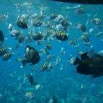 fish in Roa