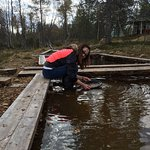Gold Panning - the water is as cold as the ice even in the early Fall
