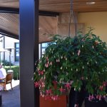 Fuchsia hanging baskets decorates the dining area