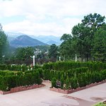 """Front green area replaced by raised beds of bushes, many dead, """"so-long"""" great view!"""