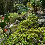 Colorful Flowers, Even in Winter, Succulent Garden