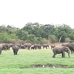 Knowing as a Elephant Geathering Plasese
