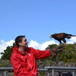 Eagles Flying Ballymote