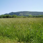 Wildflower Fields at Close Sartfield by Tricia Sayle