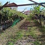 Φωτογραφία: Agriturismo Sole Blu