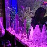 Aquarium dans le restaurant