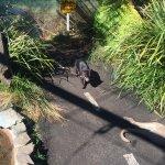 Taronga Zoo Foto