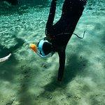 Photo de Bird's Underwater