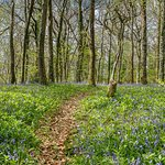 Bluebell Woods - private woodland trails