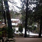 Foto de Bosque del Nahuel