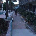 second pool walkway