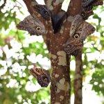 Mariposas de Mindo - Butterfly Garden Foto