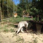 Photo de Touroparc Zoo