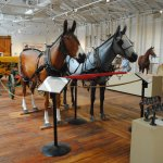 Vintage tractors and harness and equine facts on display.