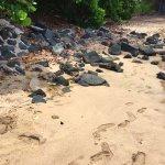 Sea Turtle at Turtle Bay Beach