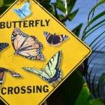 Beware of butterflies:-)