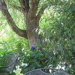 Shade tree on patio.