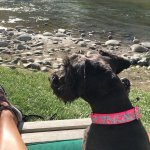 My Pup, Pyper, enjoying the view of the San Juan River. Lounge chairs provided.
