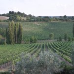 Some of the Ortaglia vineyards.
