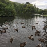 Craig-y-nos Country Park Photo