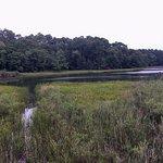 Swamp area outside