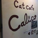 Cat Cafe Calico Shinjuku Photo