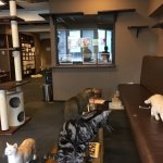 Cat Cafe Calico Shinjuku Photo