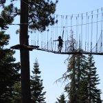 Tahoe Vista Treetop Photo