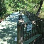 Walk path to see marshland plants and animal