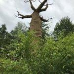 und wundersame Bäume