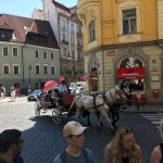 Horse carriage passing by during the Jewish Quarter part of the tour