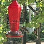 Yes, we do actually get Hummingbirds at Hummingbird Inn!