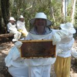 personal inspection of bee hive