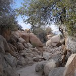 Adventure awaits in Joshua Tree National Park
