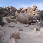 Barker Dam hiking trail, Joshua Tree National Park
