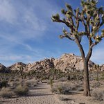 Miles and miles of hiking trails to explore in Joshua Tree National Park