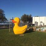 Célèbre canard piscine externe