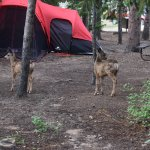 Estes Park Campground at East Portal resmi