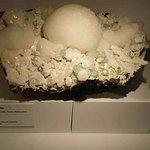 Photo de Harvard Museum of Natural History